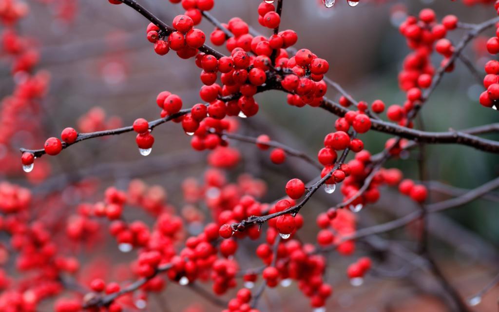 красные ягоды в духах